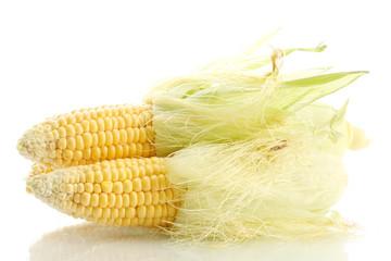 fresh corn, isolated on white