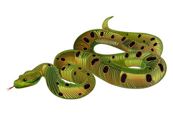 Beautiful green snake realistic