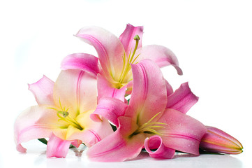 bouquet of pink lilies isolated