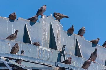 Pigeon's crap Wall mural