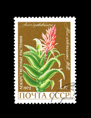 USSR shows Herbs. Aloe treelike, circa 1972