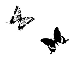 Butterfly.Isolated.
