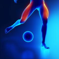 Sporstman leg muscle quadriceps