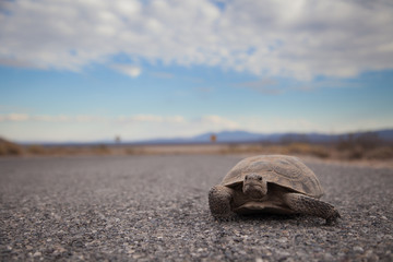 Tortoise on the Road Wall mural