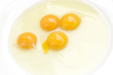 many yolks