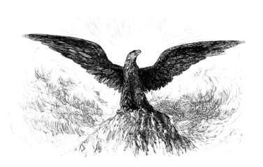 Royal/Imperial Eagle