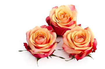 Drei zweifarbige Rosenblüten