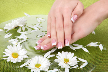 Woman hands with french manicure and flowers in green bowl with