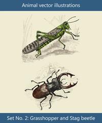 Vektor Illustrationen Heuschrecke und Hirschkäfer