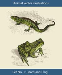 Vektor Illustrationen Eidechse und Frosch
