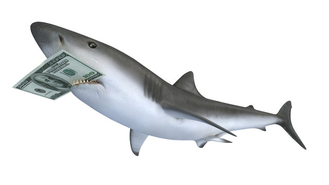 shark biting a dollar banknote