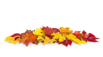 Wall Mural - Group of colorful autumn leaves