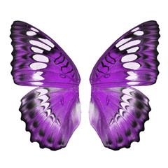 Purple butterfly wing
