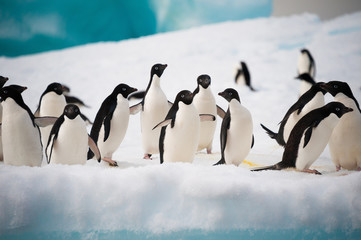 Wall Murals Antarctic Penguins on the snow