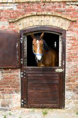 Obraz Koń w stajni - fototapety do salonu