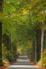 Autumn road in Dutch national park Veluwe