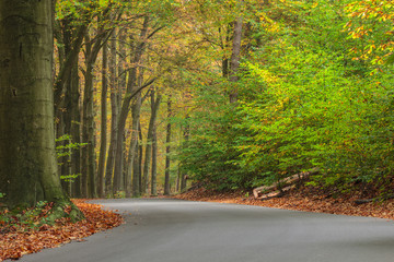 Curved autumn road in Dutch national park Veluwe
