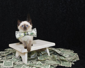 Who Ever Said Money Can't Buy Happiness,Never Bought A Kitten