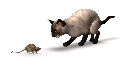 Siamese Cat And Rat