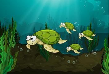Poster Submarine turtles