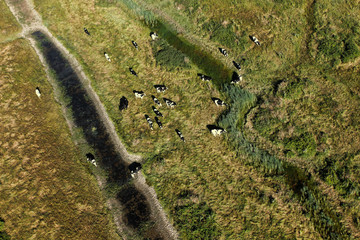 Marais et élevage en charente-Maritime