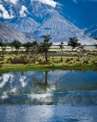 Sunny day view with trees at Nubra Valley. India, Ladakh