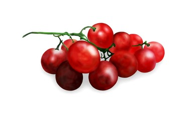 Hand Drawing of  Fresh Juicy Red Grapes