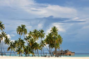 The Maldives coast of palm trees