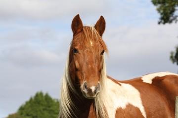Portrait d'un poney