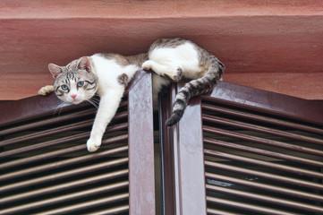 Cat climbing window.