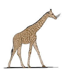 Funny giraffe, sketch for your design