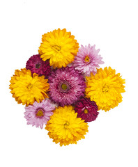decoration of chrysanthemums isolated