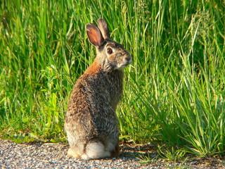 goofy rabbit 1