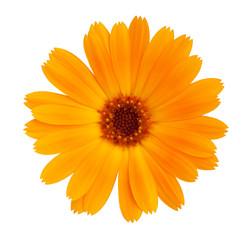 Wall Mural - Decorative daisy bright orange color