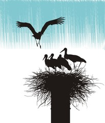 Family of storks in nest