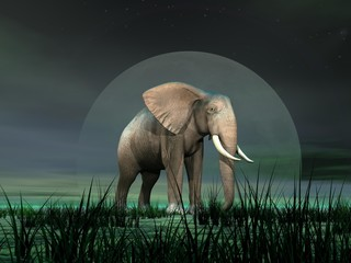 Elephant by moonlight