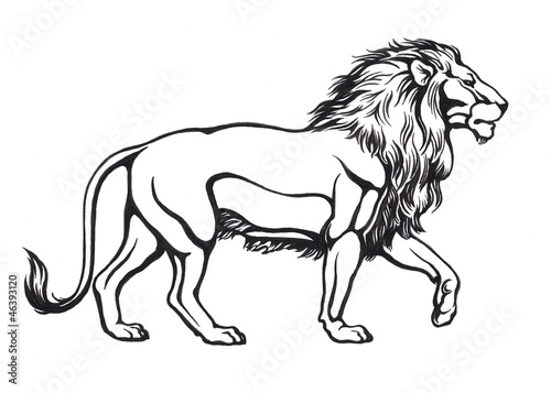 черно-белые картинки льва