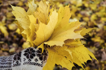 hands in mittens holding a bouquet of autumn leaves close up