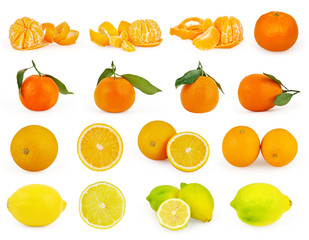 Set of citrus fruit isolated on white background