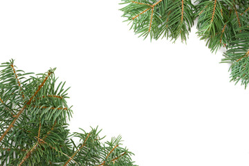 christma tree branches over white background