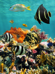 Colorful underwater marine life in a coral reef, Caribbean sea, Mexico