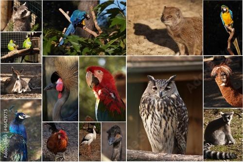 montage p le m le les animaux au zoo photo libre de droits sur la banque d 39 images. Black Bedroom Furniture Sets. Home Design Ideas