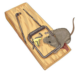 Mouse in a mousetrap.