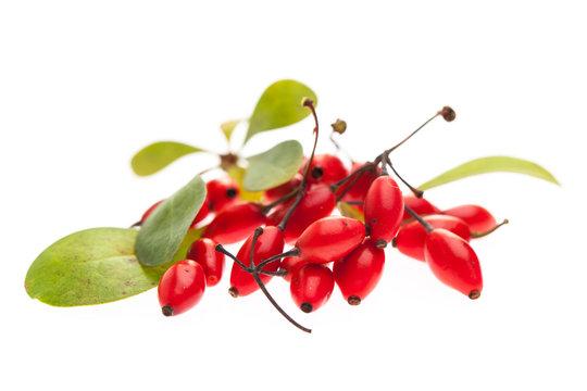 Berberitze (Berberis vulgaris) rote Beeren und Blätter auf wei