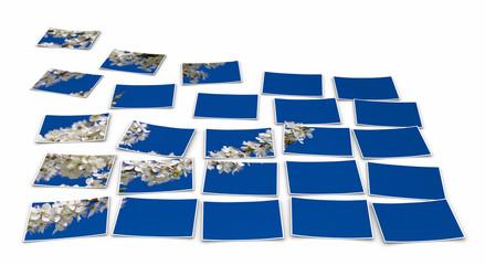 Fotosplit - Weisse Blüten vor blauem Himmel