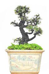 tree on pot