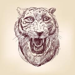 Tiger hand drawn