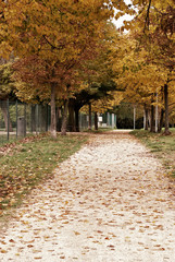 path in the city park in october