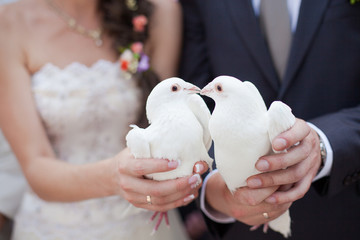 Wall Mural - Two white doves.Wedding