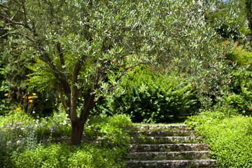 Wall Mural - Jardin, italie, olivier, été, saison, campagne, vert, escalier